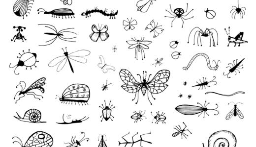虫が苦手でも大丈夫!多肉植物に虫が付いた時の対応方法
