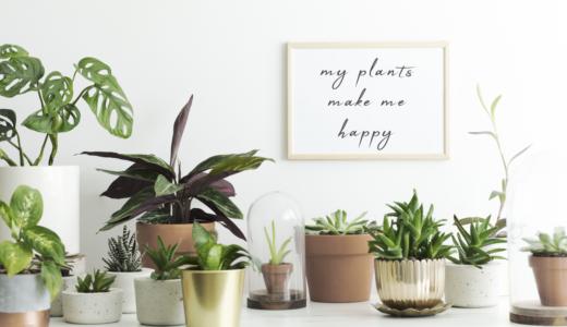 多肉植物を植えるのに適した鉢とは?